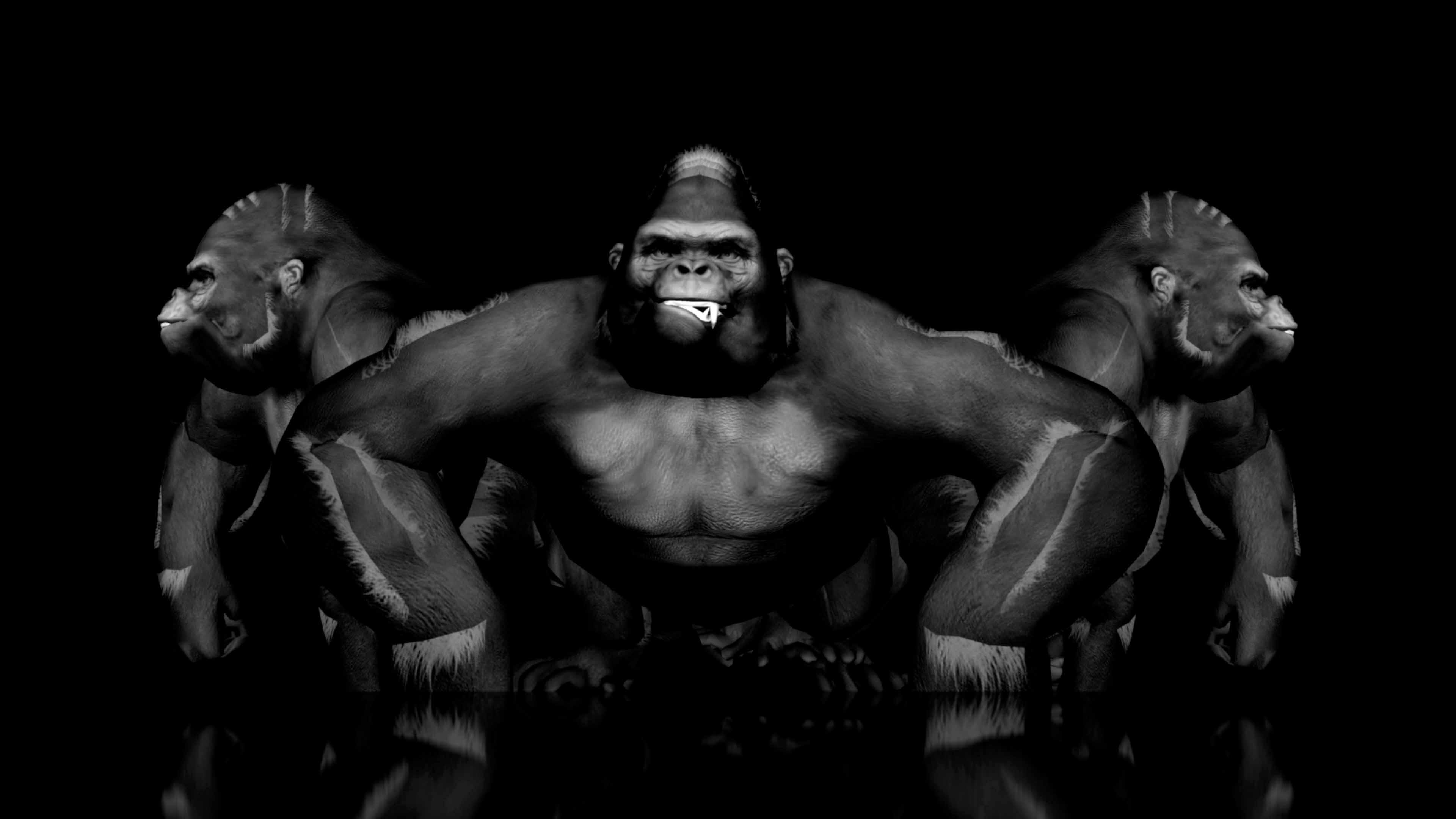 monkey vj loops
