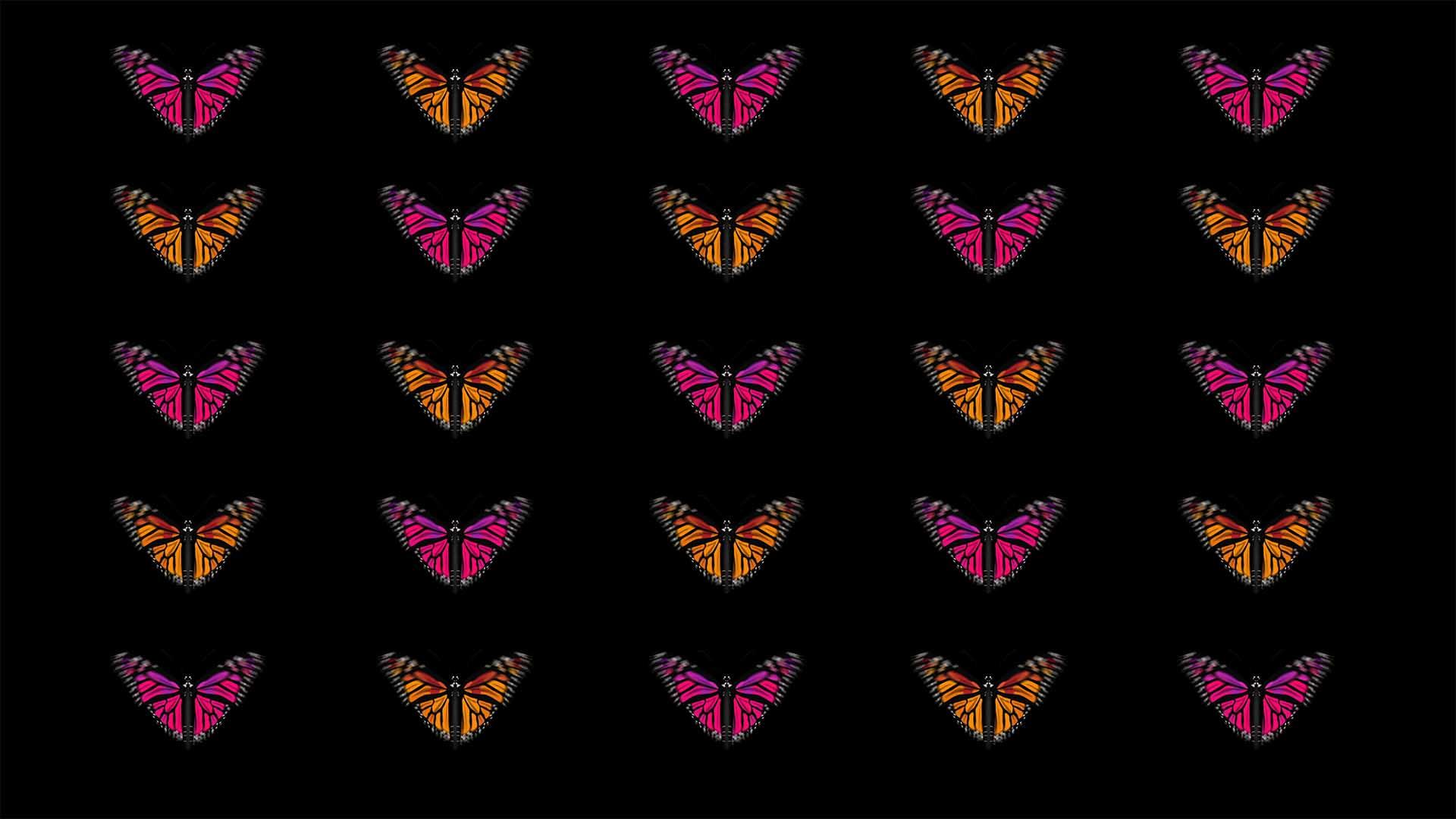 Butterfly 4K Vj Loops