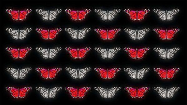 Butterfly Effect 4K Video Footage