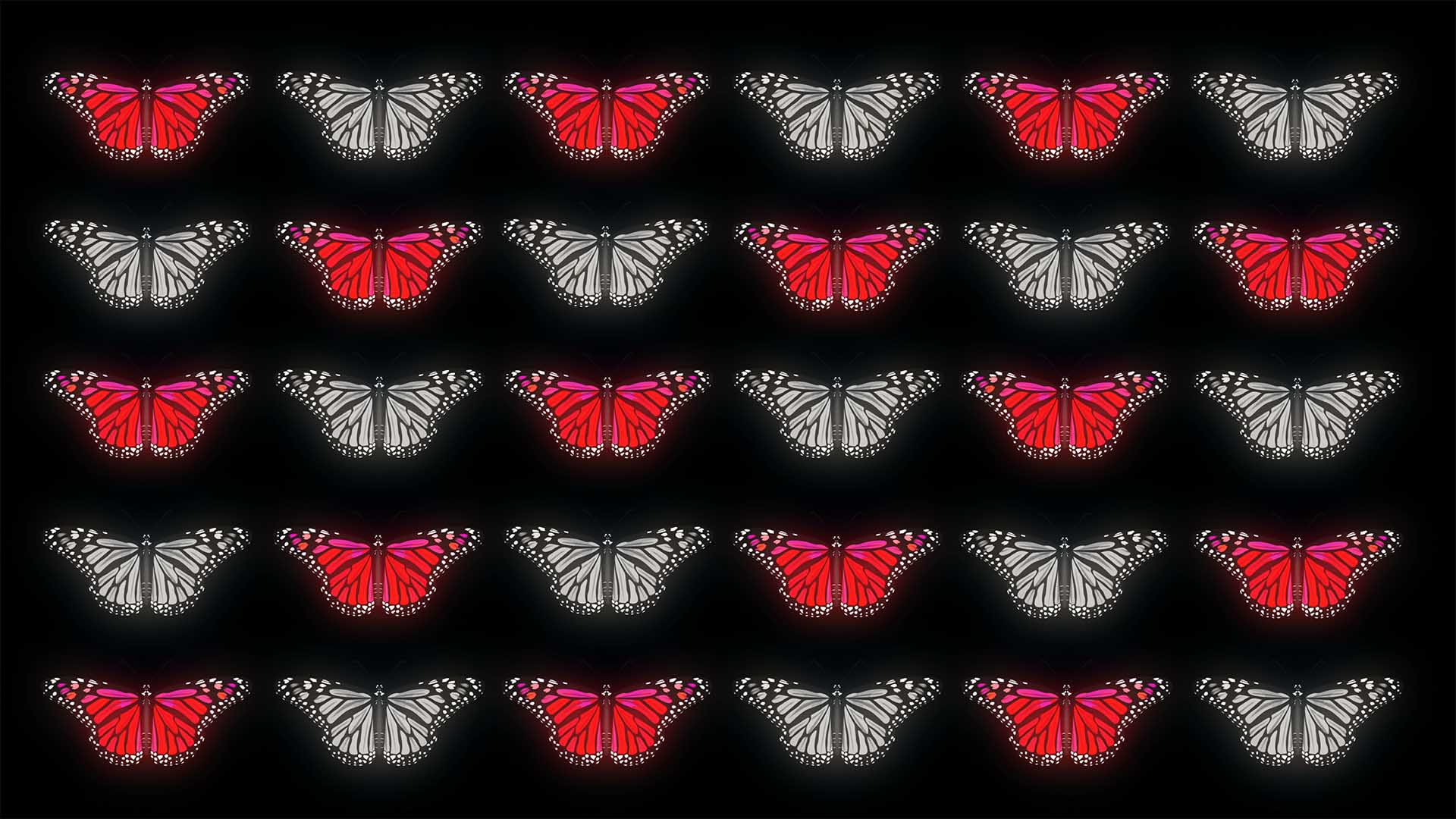 Butterfly Effect 4K Video Footage