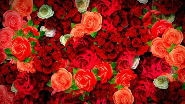 Motion Background Flower Rain