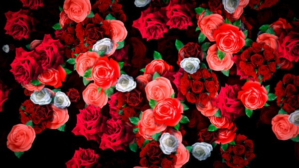 VJ Loop Flower Rain