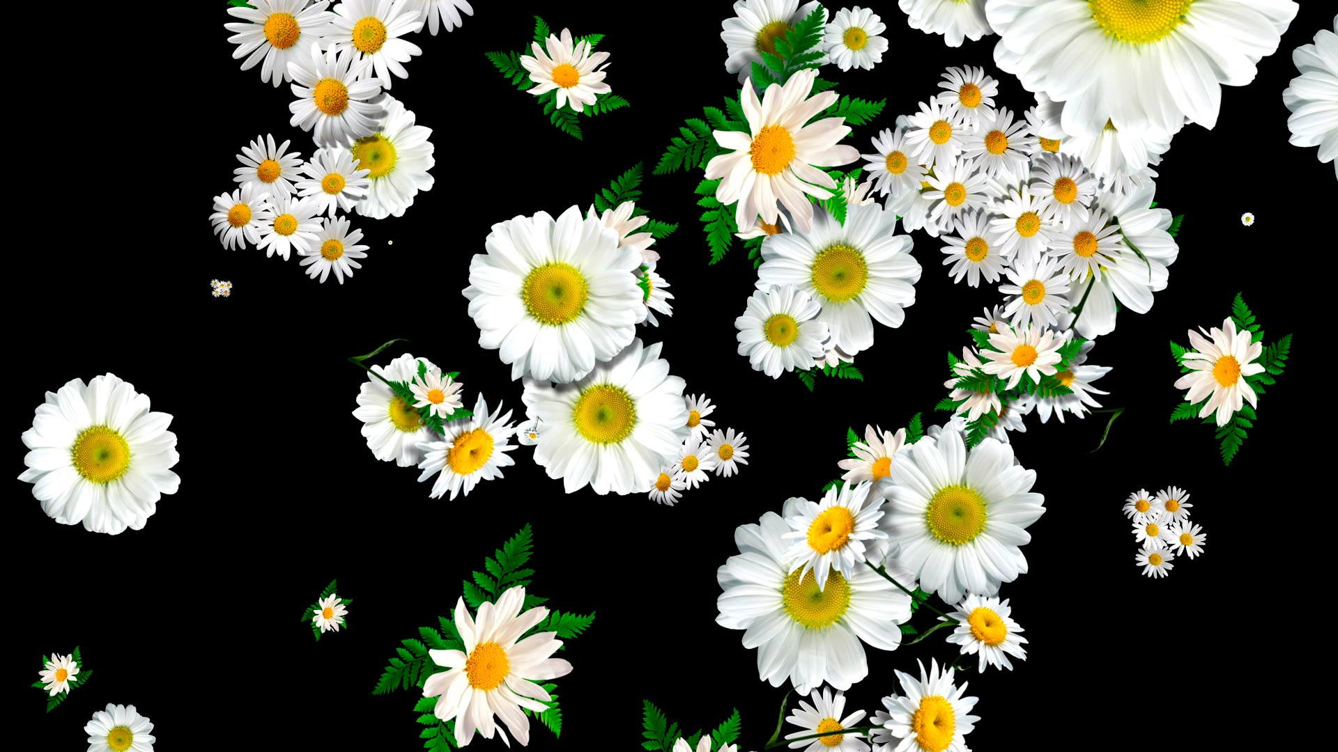 Scene Decoration Loops Flower Rain